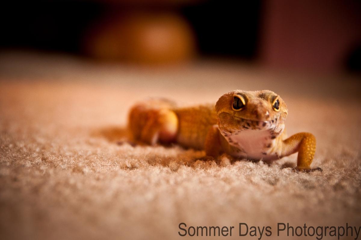 geckos-0153